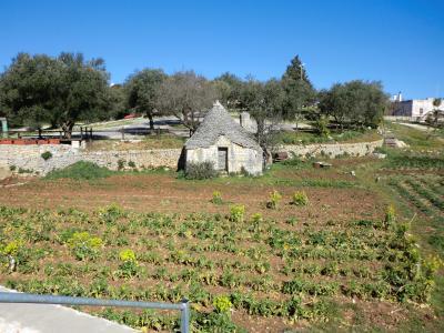 オリーブ畑とトゥルッリミニバージョン