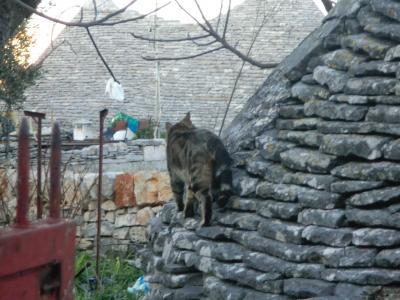 トゥルッリの屋根の上の猫