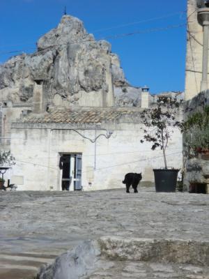 イドリス教会と黒猫