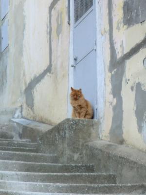 マテーラの猫ちゃん2