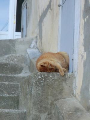 マテーラの猫ちゃん地面にすりすり