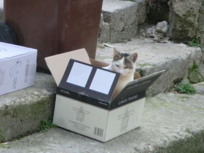 マテーラの箱猫ちゃん