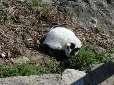 マテーラの昼寝猫ちゃん