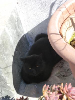 マテーラ 近所のボス黒猫