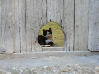 サッシ・カヴェオーソ地区の子猫