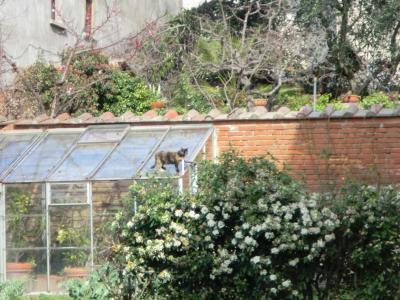 ヴァザーリの家の庭