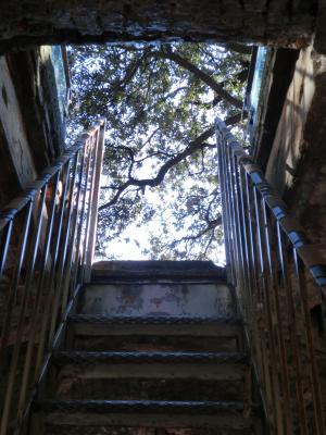 ルッカ グイニージの塔 てっぺんの木